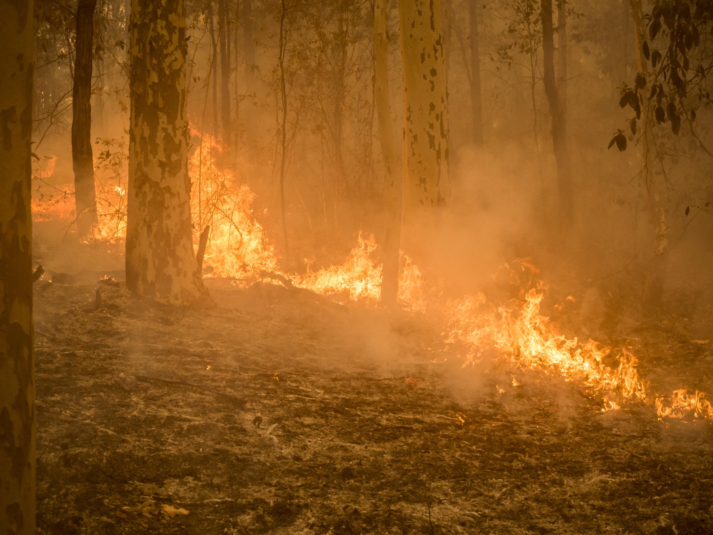 Hatatila Syvenee Australiassa Ilmastonmuutos On Steroidia