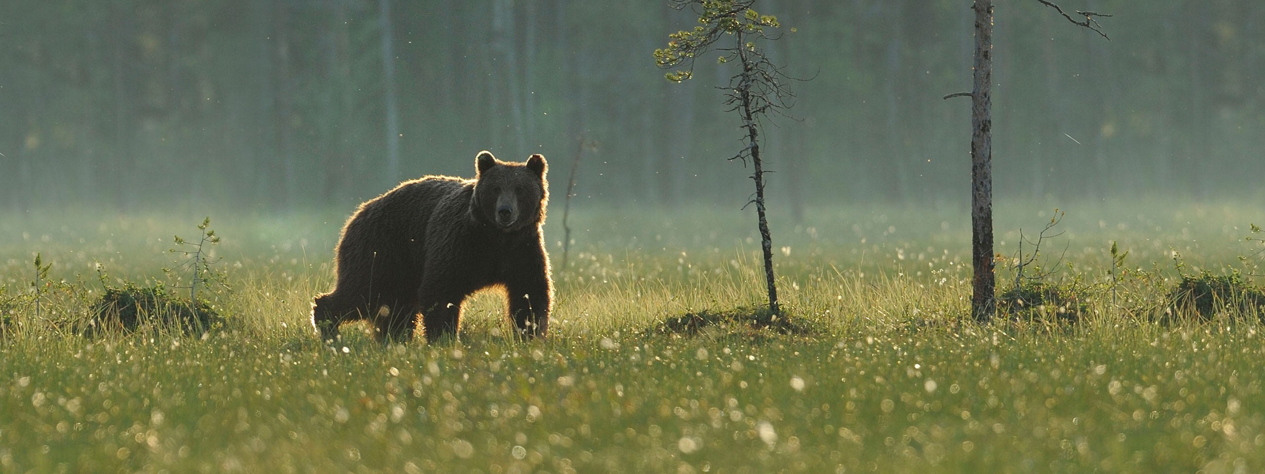 ©  Wild Wonders of Europe /Staffan Widstrand / WWF