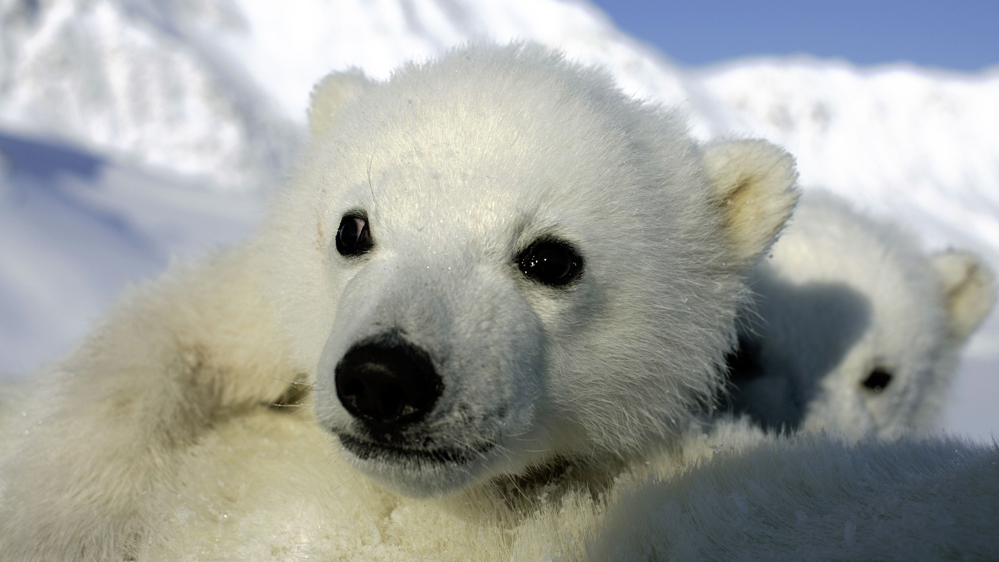 Jon Aars / Norwegian Polar Institute / WWF-Canon