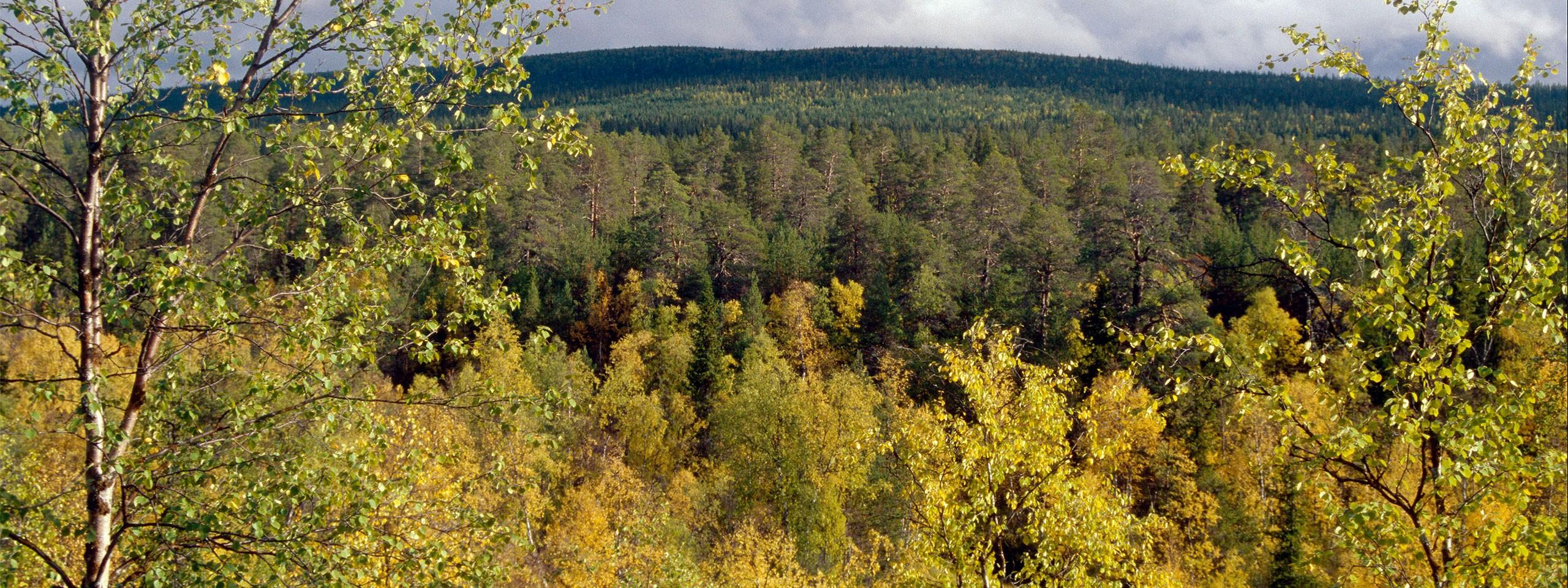 Metsien Suojelu
