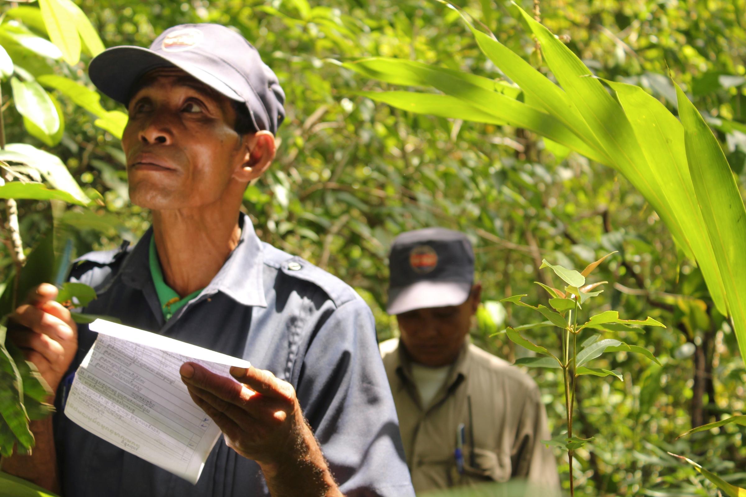 Lippahattupäinen henkilö tarkastelee puita lomakepaperi kädessään. Taustalla toinen henkilö ja kasvillisuutta.