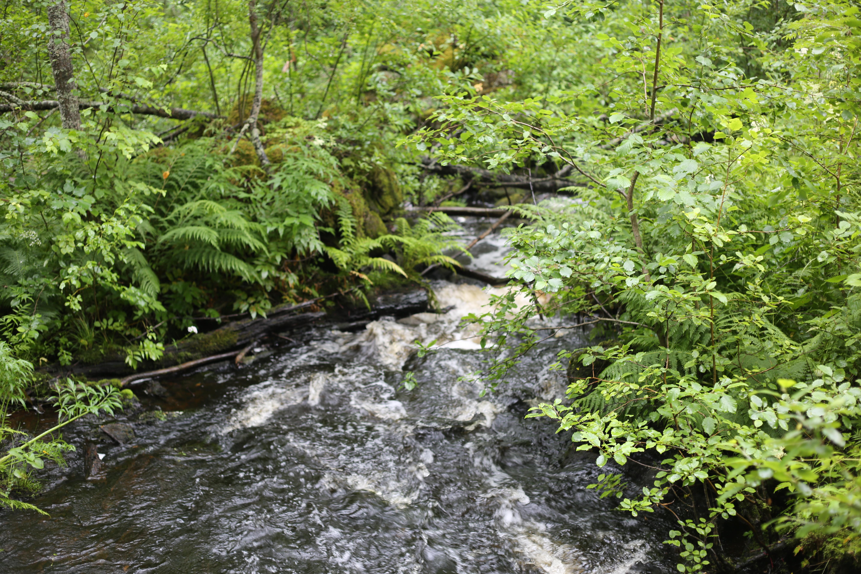Metsikön keskellä virtaava pieni joki.