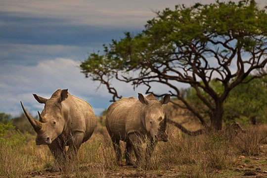 © Brent Stirton / Getty Images / WWF-UK