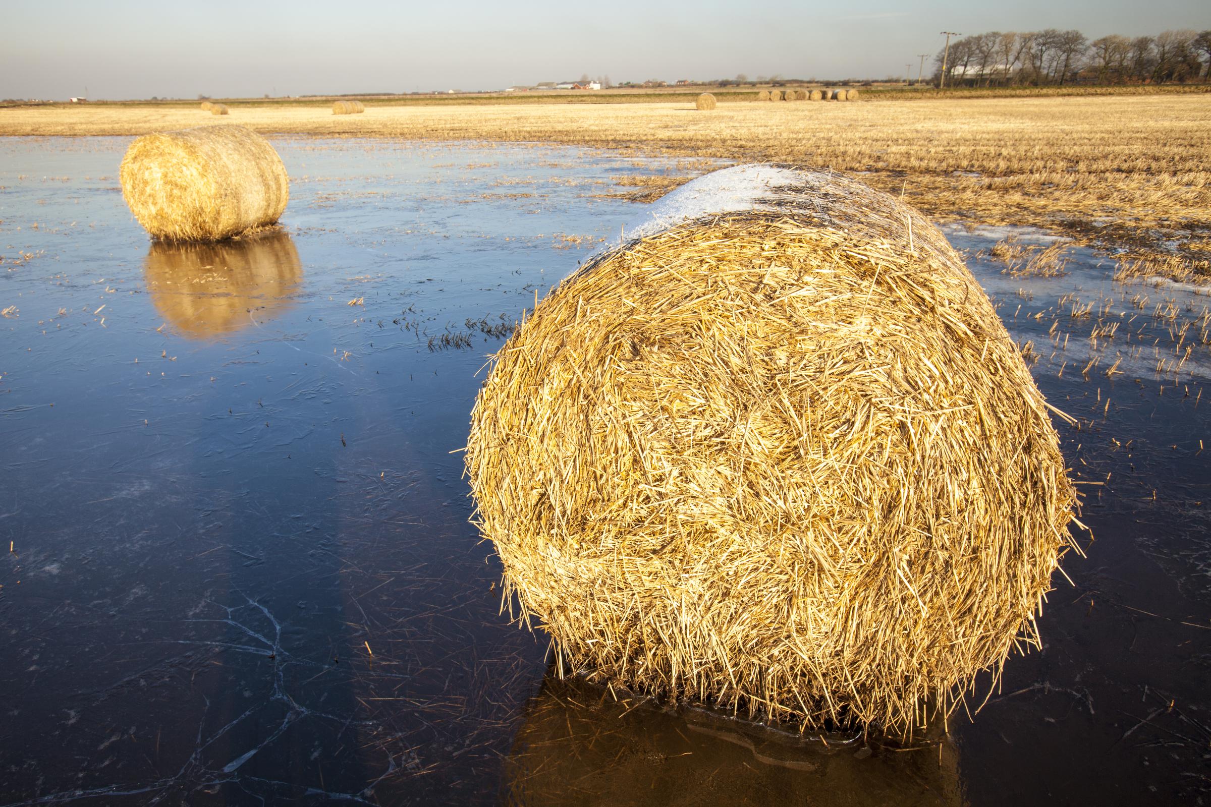 Olkipaaleja tulvan valtaamalla pellolla