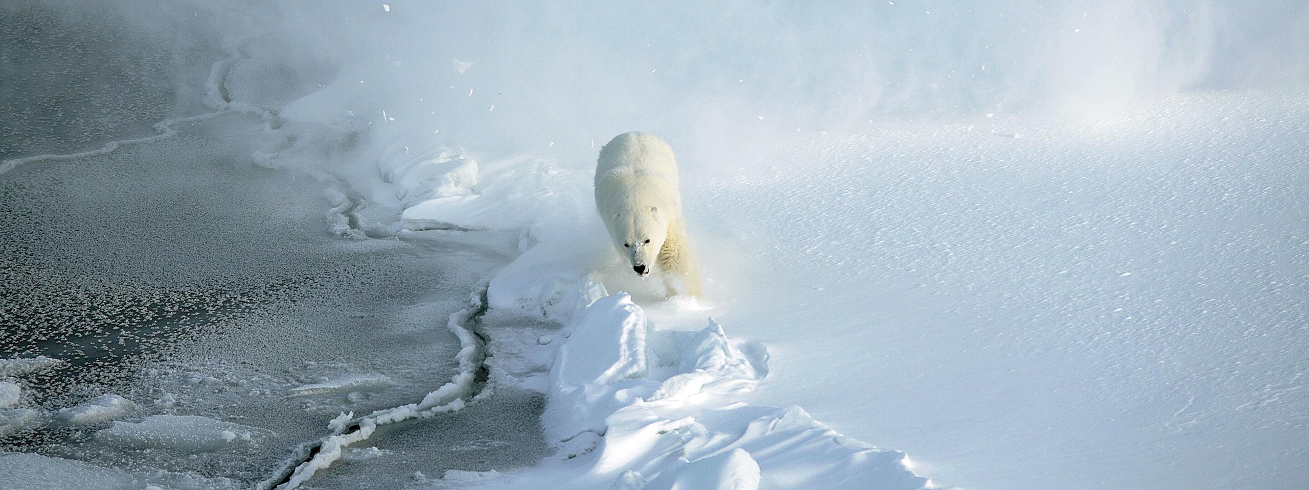 Jääkarhu © Jon Aars / Norwegian Polar Institute  / WWF-Canon