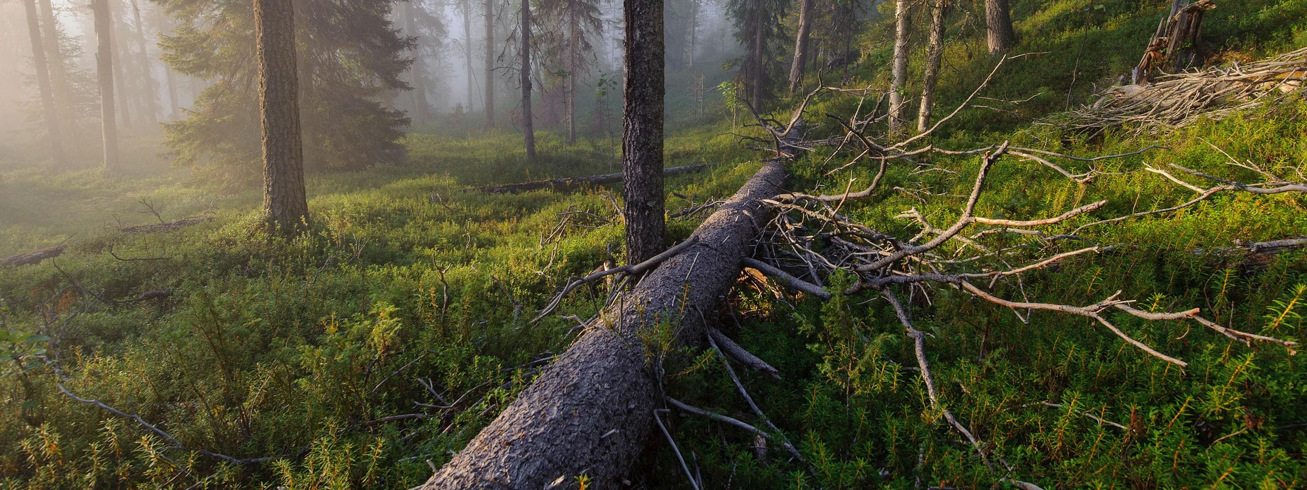 © Erik Saarnio / Vastavalo