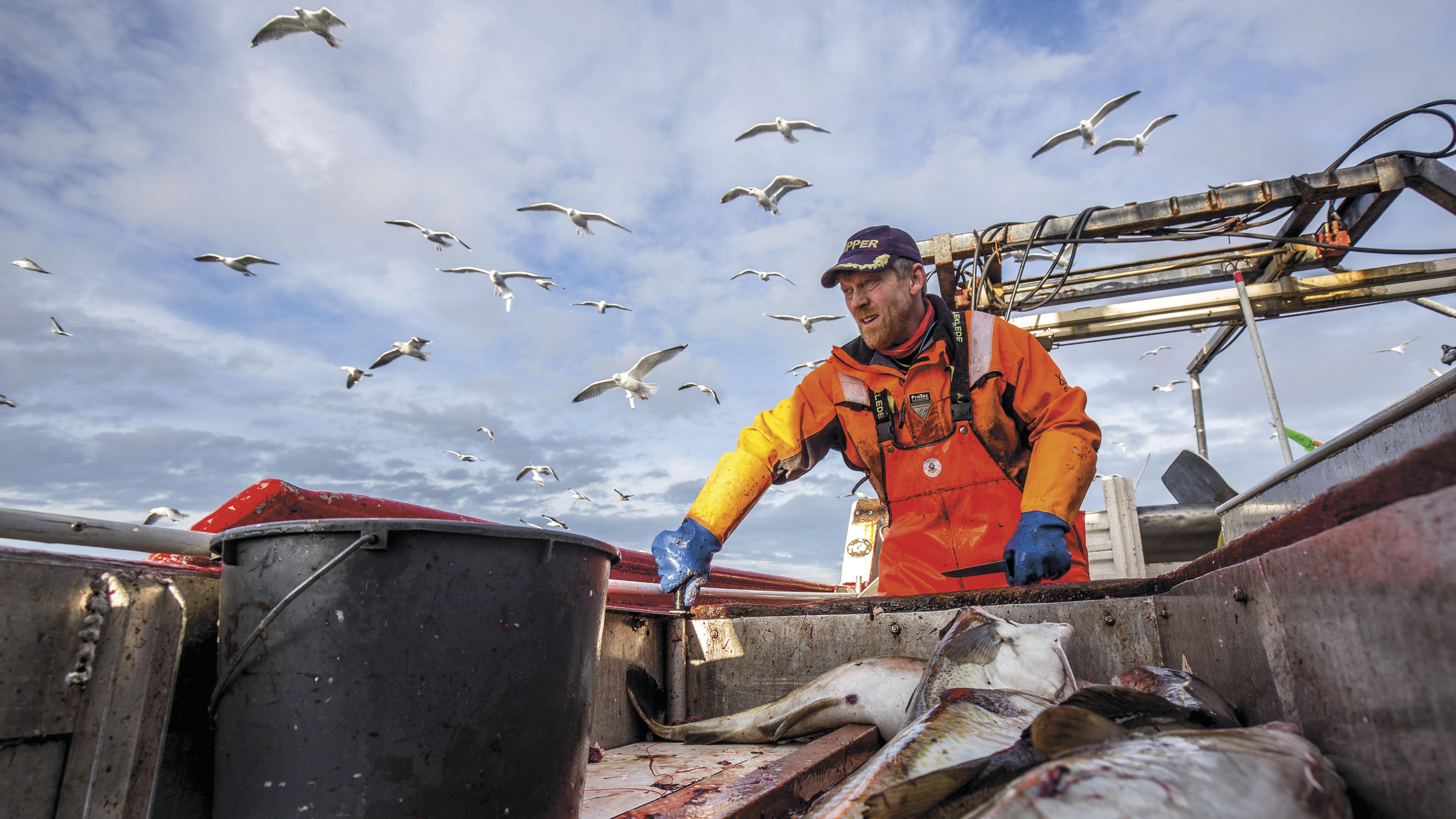 kaupallinen kalastaja