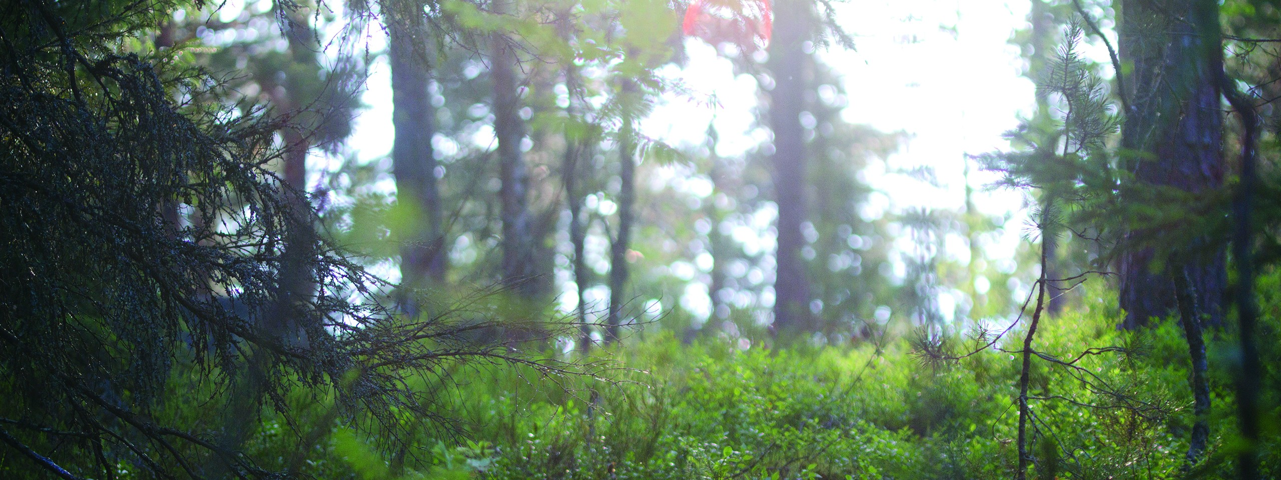 Metsää Nuuksiossa © WWF