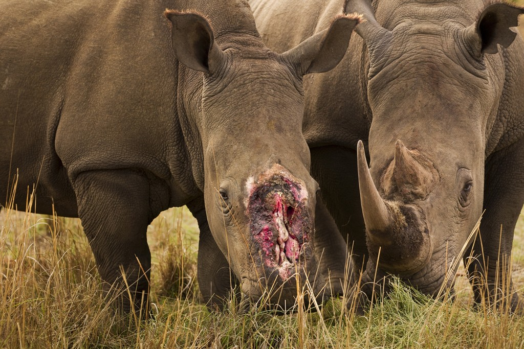 Brent Stirton / Getty Images / WWF-UK