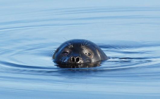 ©Mervi Kunnasranta / WWF